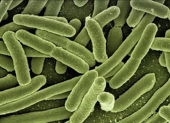 Las cianobacterias terrestres podrían generar oxígeno en Marte