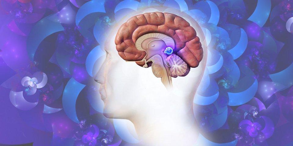 Hay Un Órgano En Tu Cerebro En El Que Se Sienta Tu Alma