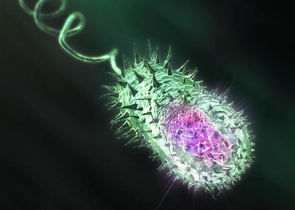 Jugando a ser Dios,Un organismo semisintético quesupera al biologico