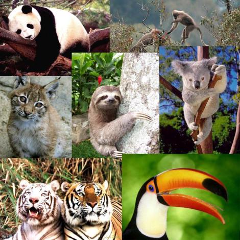 Cuantas más especies mueren, más se acelera la evolución