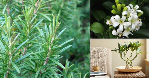 5 plantas para promover la energía positiva en tu hogar
