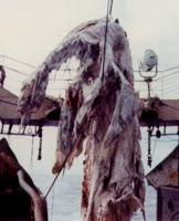 Morgawr, el monstruo marino de Cornualles
