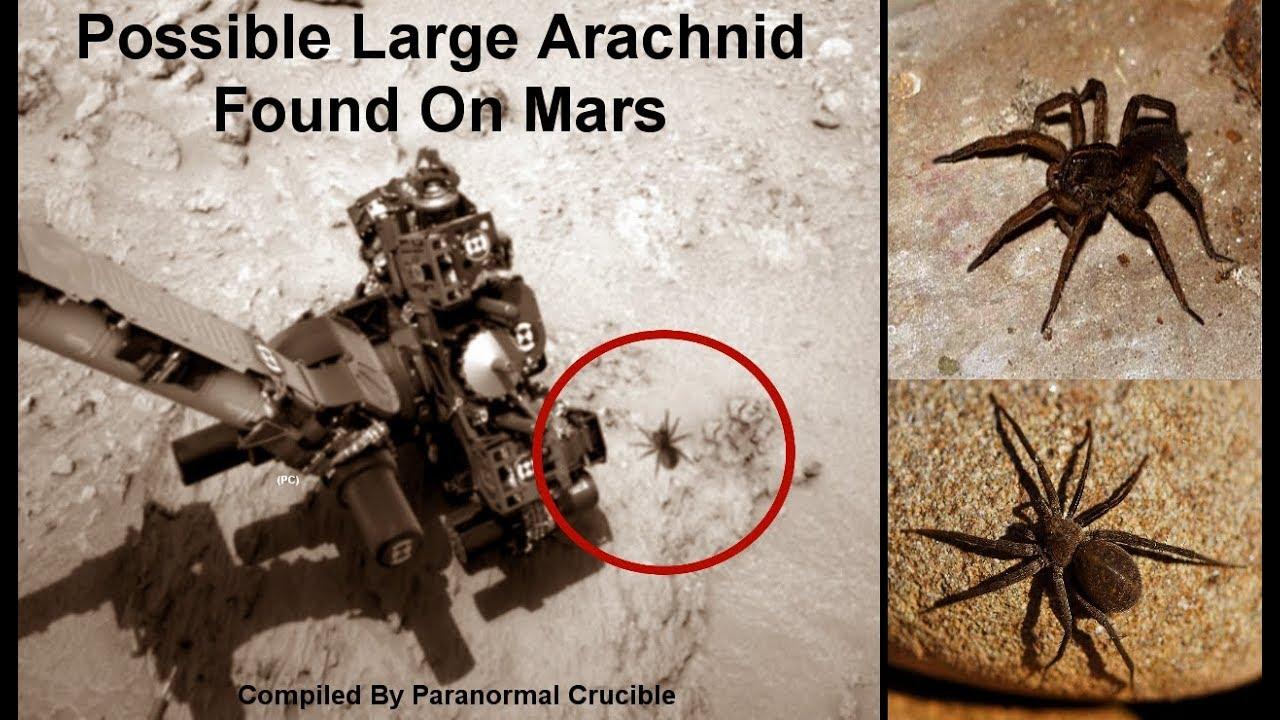 ¡Alien Spider encontrado en NASA Mars Photo, prueba de vida alienígena!