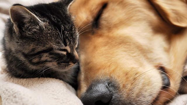¿Qué ocurre con el alma de las mascotas fallecidas?