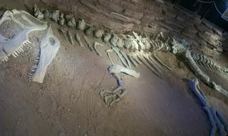 Cómo se convierte un hueso en fósil?