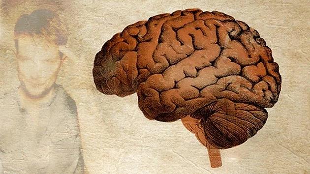 Descubren una proteína que potencia o anula nuestra memoria