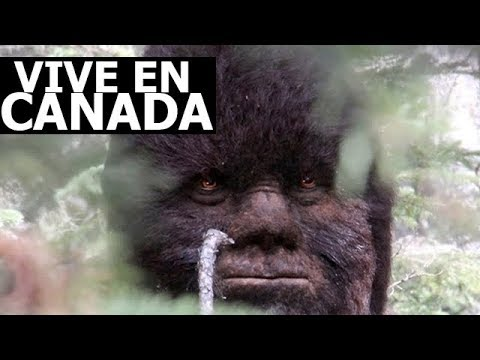 BIGFOOT VIVE EN CANADA