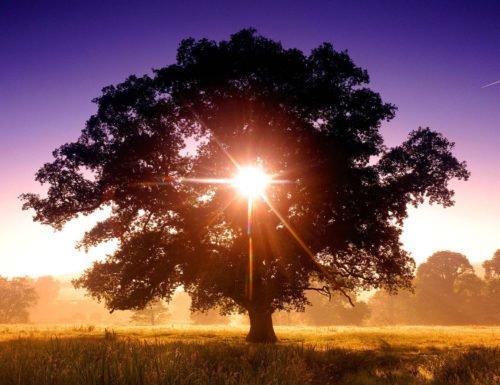 borrador automatico 129 - ¿Sabías que hay un Árbol que Sostiene toda la Vida?