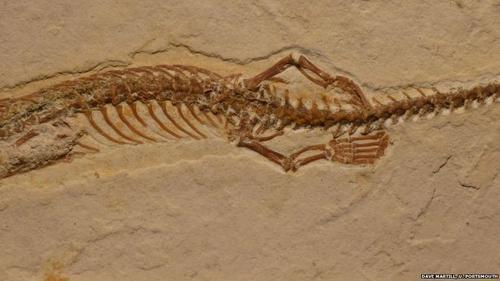Arqueólogos descubren cómo era la serpiente antes de la maldición de Dios en el Edén