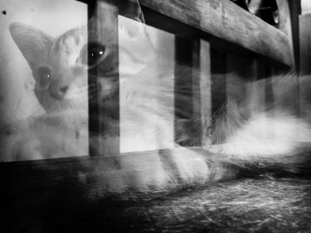Puede el vínculo con las mascotas manifestarse incluso después de la muerte?