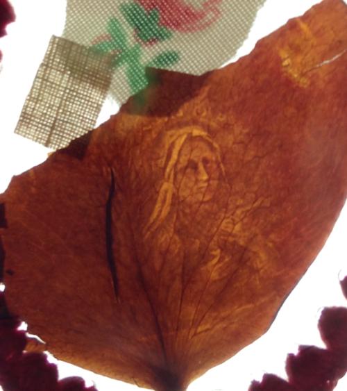 unnamed file 99 - Los Impresionantes Dones y Curaciones de Rhoda Wise