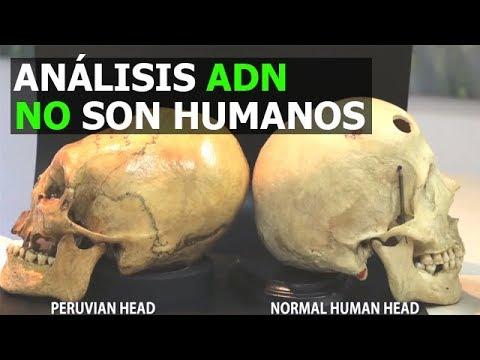 CRÁNEOS DE PARACAS ANÁLISIS CONFIRMAN NO SON HUMANOS