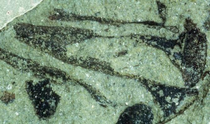 Los vegetales colonizaron tierra firme 100 millones de años antes de lo creído