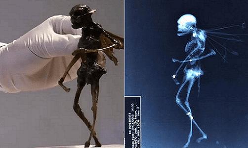 ¿Esta criatura es un Hada? Investigadores realizan pruebas de rayos X a esta extraña criatura