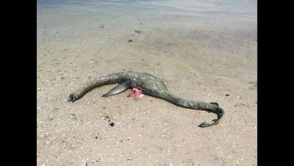 Tenemos por fin evidencia real del monstruo del lago Ness?