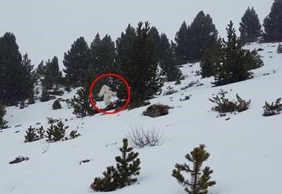 15236535284354983193192998616858 - Ser extraño avistado en los Pirineos:¿ Hombre de las nieves?¿Se ha extinguido?
