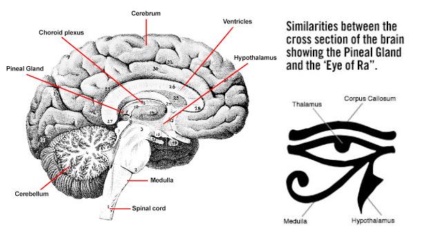 borrador automatico 25 - Estas civilizaciones antiguas conocieron a la perfección su tercer ojo.