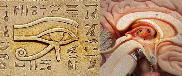 borrador automatico 28 - Estas civilizaciones antiguas conocieron a la perfección su tercer ojo.