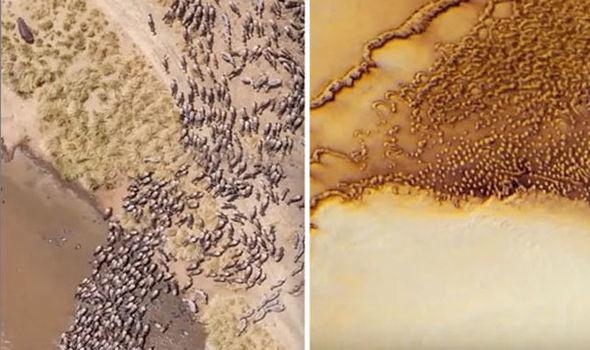NASA: Enorme 'manada de animales alienígenas encontrados en las imágenes de la sonda espacial de Marte'