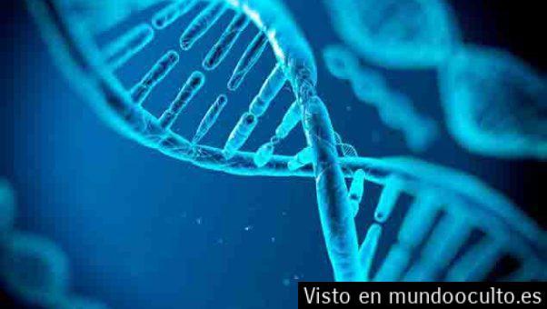 Científicos encuentran el código genético para restablecer extremidades