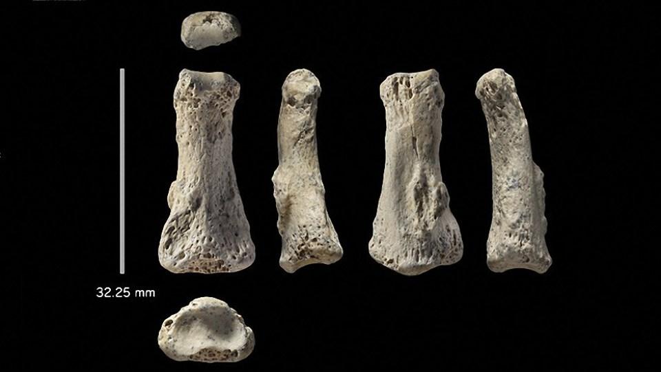 el hallazgo de un dedo de 85 000 años podria reescribir la historia de la especie humana - El hallazgo de un dedo de 85.000 años podría reescribir la historia de la especie humana