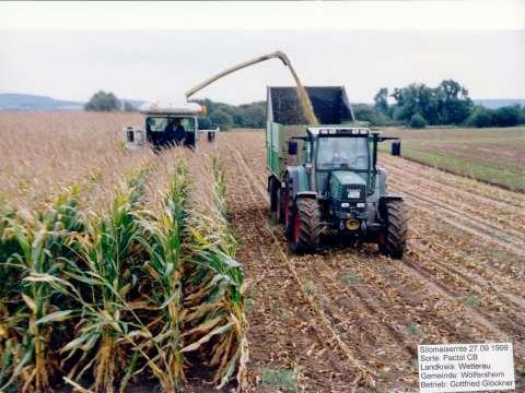 El primer maíz Bt transgénico en ser comercializado era tóxico, así lo confirman un científico y un agricultor