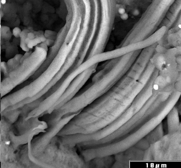 Evidencia de Microfósiles Indígenas en un Meteorito deCarbonoceno
