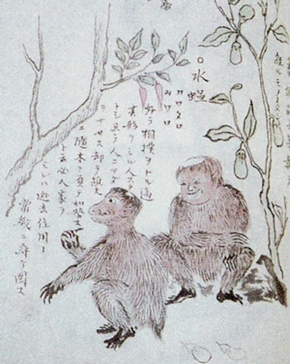extranas bestias misteriosas de las islas del sur de japon 1 - Extrañas bestias misteriosas de las islas del sur de Japón