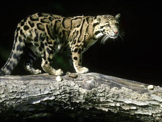 extranas bestias misteriosas de las islas del sur de japon 3 - Extrañas bestias misteriosas de las islas del sur de Japón