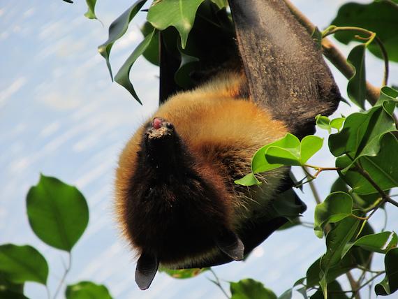 extranas bestias misteriosas de las islas del sur de japon 5 - Extrañas bestias misteriosas de las islas del sur de Japón