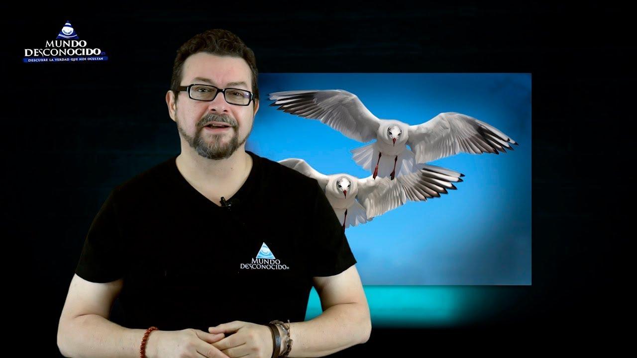 Sorprendente Descubrimiento en los Pájaros
