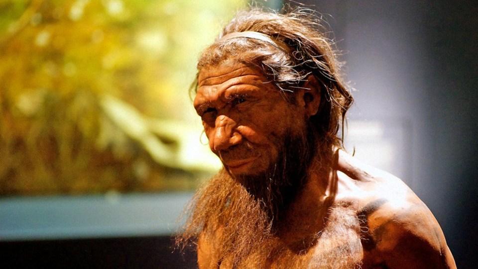 """ingenieros geneticos """"resucitaran"""" el cerebro de los neandertales a partir de celulas humanas - Ingenieros genéticos """"resucitarán"""" el cerebro de los neandertales a partir de células humanas"""