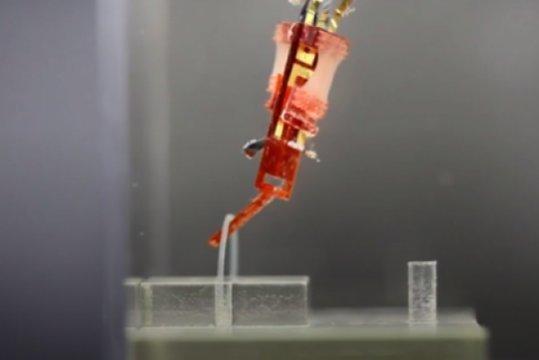 Mejoran los músculos para los futuros robots
