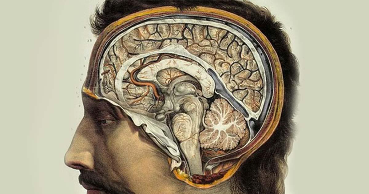 ¿Por qué los humanos tienen cerebros tan grandes?
