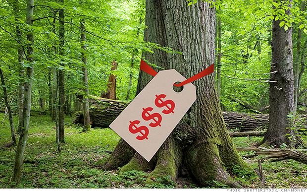¡Madera! Por qué los ricos compran árboles