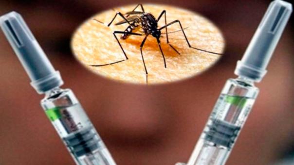 Más cerca de una vacuna eficaz para el dengue