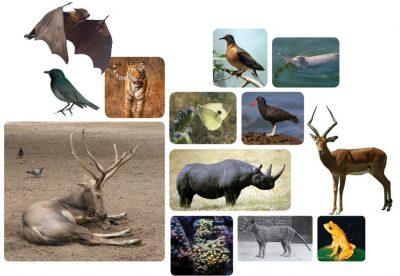 animals 400x276 - 90% de los animales en la tierra aparecieron al mismo tiempo ¿Que sucedió? estudio científico lo afirma