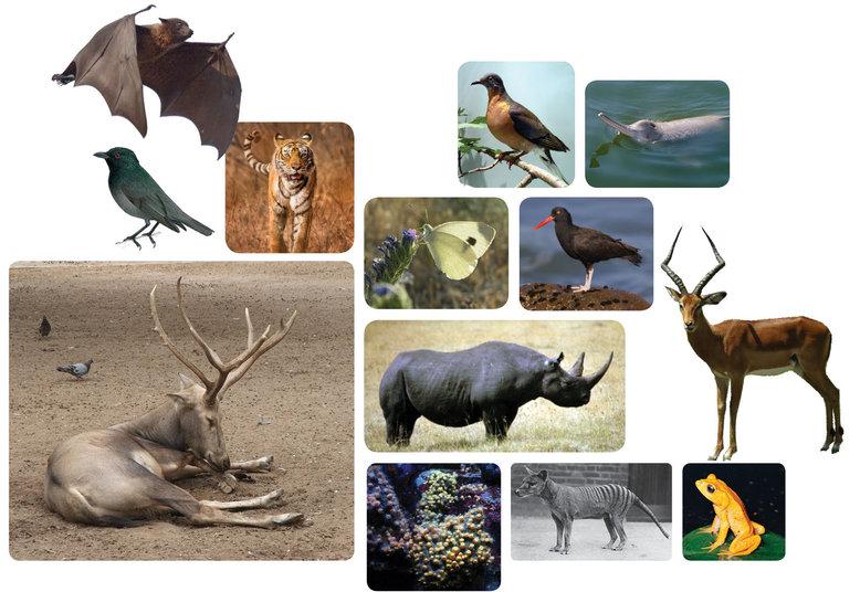 90% de los animales en la tierra aparecieron al mismo tiempo ¿Que sucedió? estudio científico lo afirma