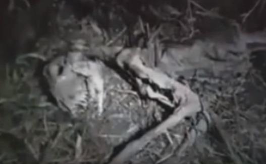 Los restos del dinosaurio se encontraron en la jungla de América del Sur?