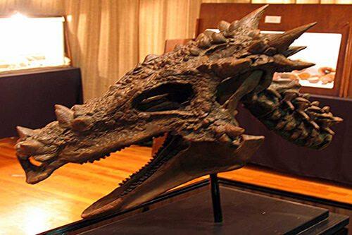 Dracorex Hogwartsia-El cráneo del dragón Intacto Dracorex descubierto en América del Norte