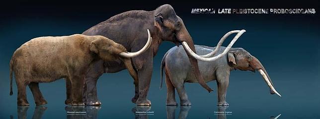 Gonfoterios, los elefantes ancestrales que convivieron con los primeros americanos