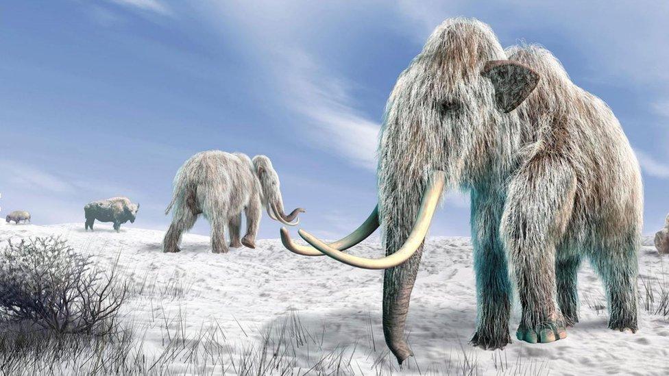 La posibilidad de clonar especies de animales extinguidas está cerca
