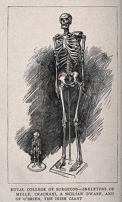 La verdad sobre los esqueletos gigantes REALES de los montículos indígenas de América del Norte