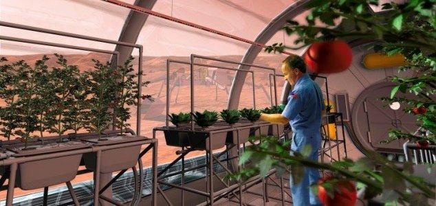 Los Bebés Nacidos En Marte Pueden Ser Una Nueva Subespecie