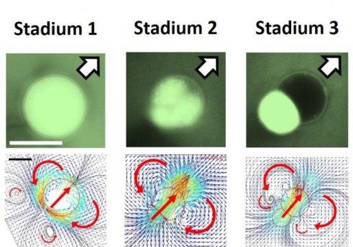 Los físicos desarrollaron gotas autopropulsadas que pueden actuar como microvehículos programables