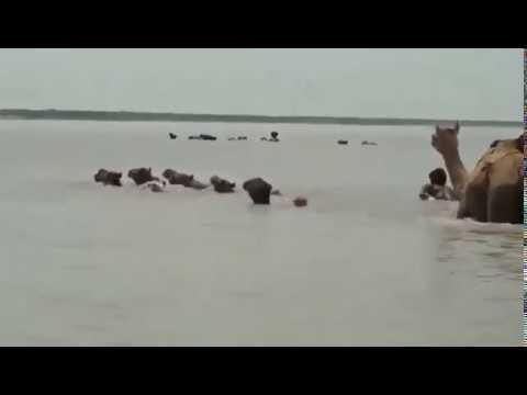 VIDEOS: Se inunda parte del desierto de Arabia tras el paso de un ciclón