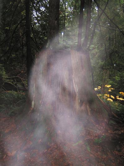 ¿pueden los fantasmas ser identificados por su olor 2 - ¿Pueden los fantasmas ser identificados por su olor?