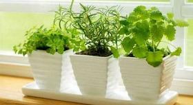 50 plantas que atraen energias positivas segun la sabiduria ancestral