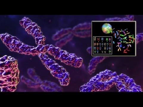 Científicos Descubren un Increíble Método Para Alargar la Vida