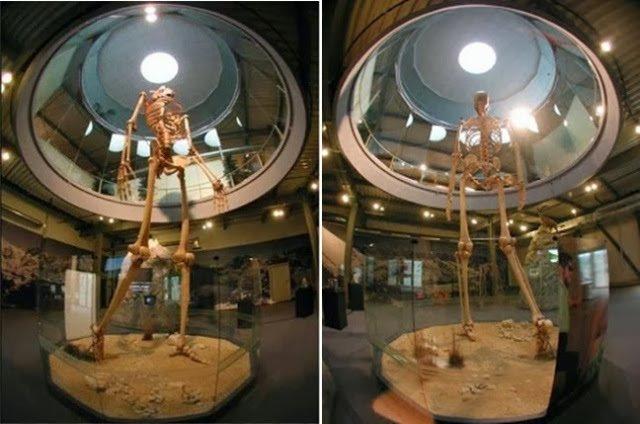 El olvidado gigante de 7 metros de ecuador se exhibe en el mystery park, suiza